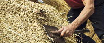 Strzecha, krycie dachów trzciną